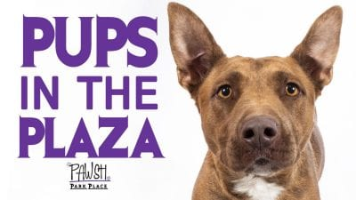 graphic - pups in the plaza banner ad