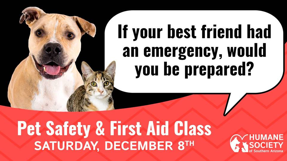 graphic - pet safety & first aid class banner ad