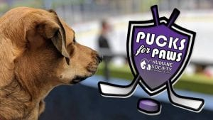 Graphic - puck for paws banner ad