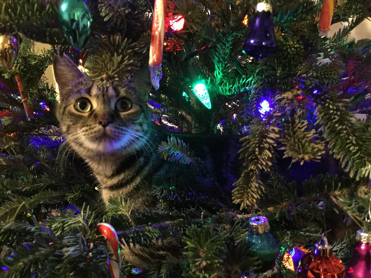 kitty-1708657_1280