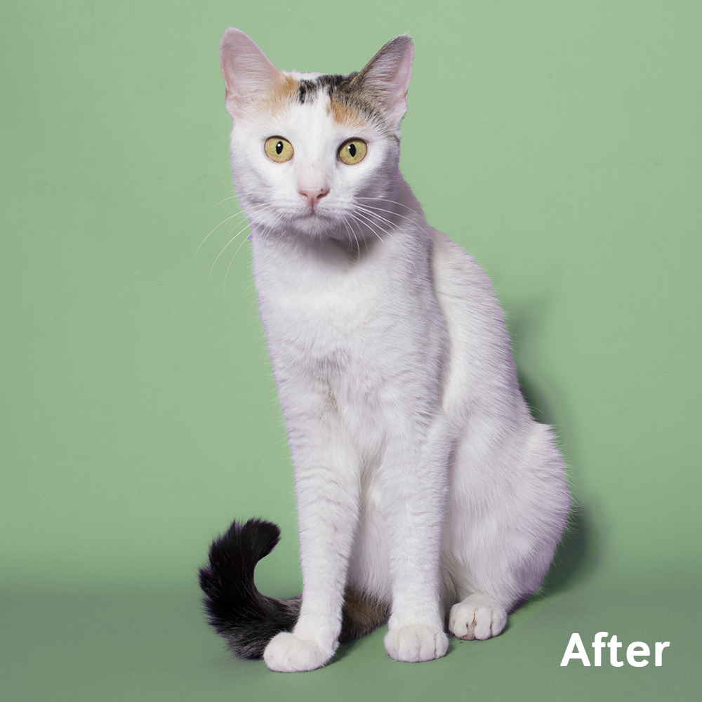 Abbie (857549) After