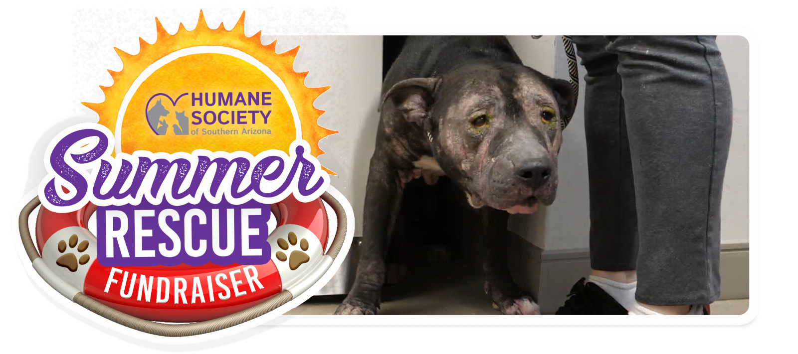 Summer Rescue Fundraiser Email Header Template - Bugsy