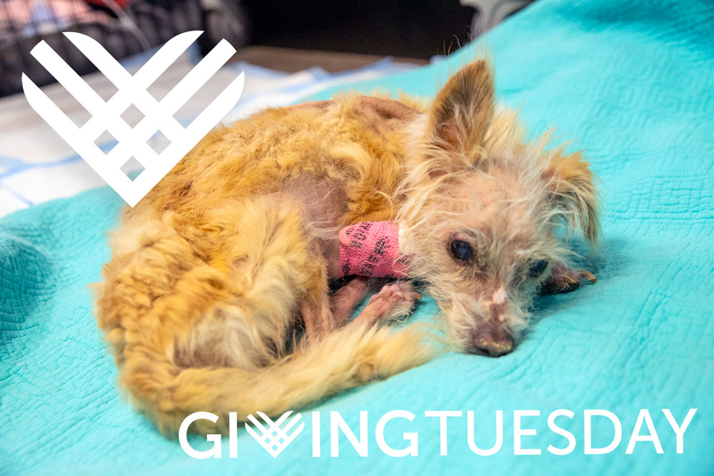 Lilly-Giving-Tuesday