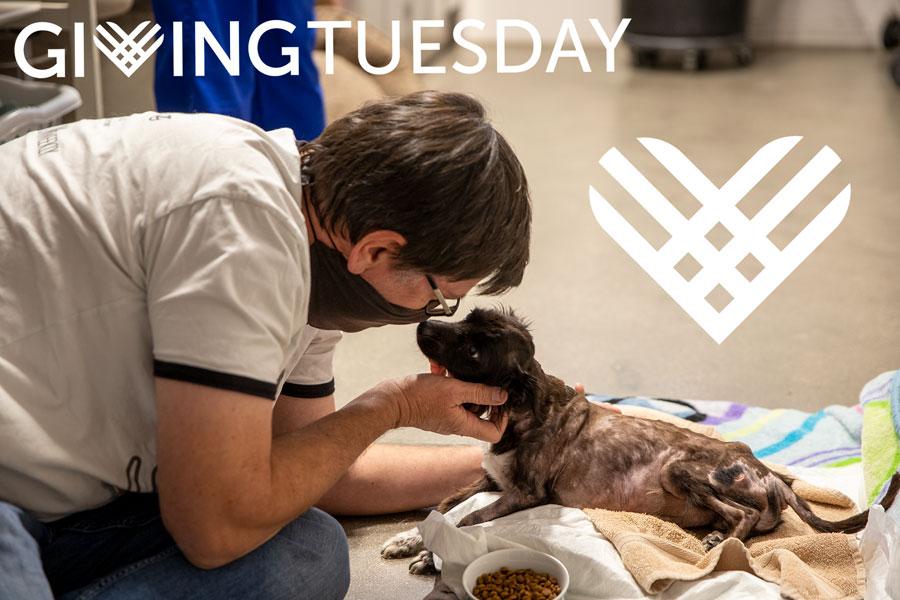 Milo-Giving-Tuesday