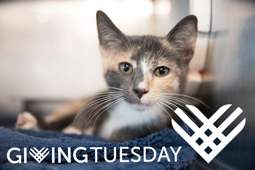Phoebe-Giving-Tuesday