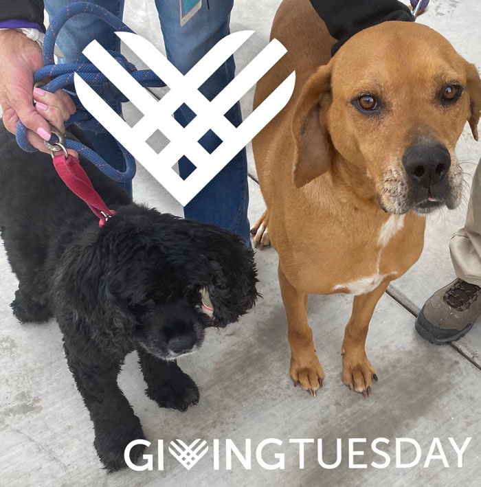 Ruckus-and-Cletus-Giving-Tuesday
