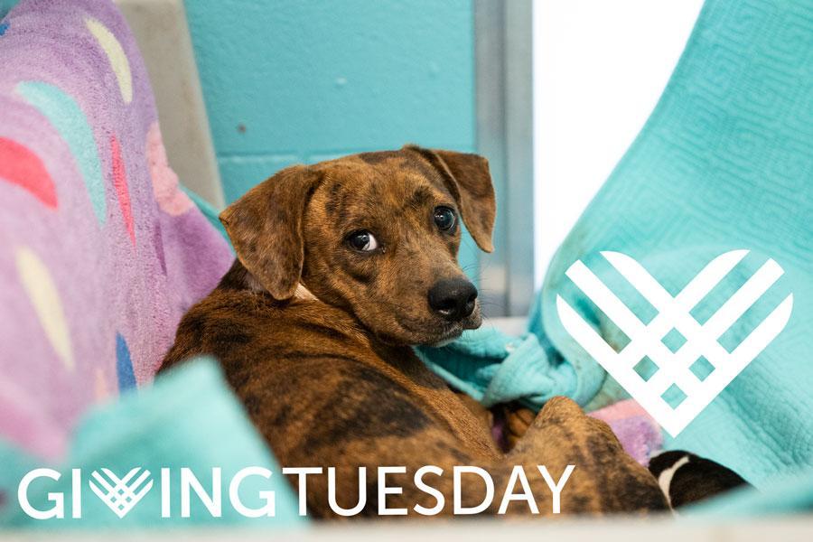 Winnie-Giving-Tuesday