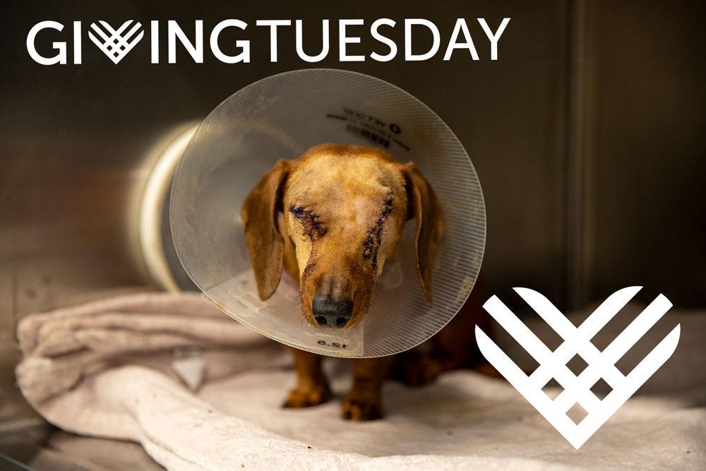 Yuka-Giving-Tuesday