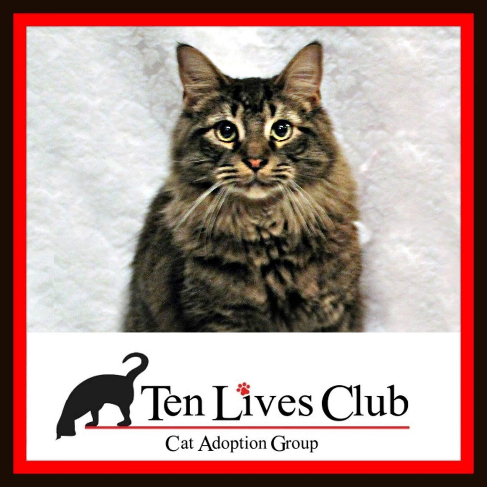 Ten Lives Club Logo