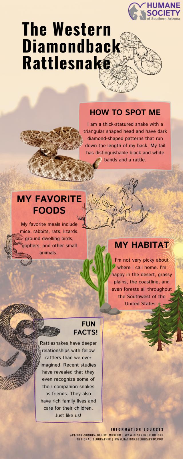 Rattlesnakes blog