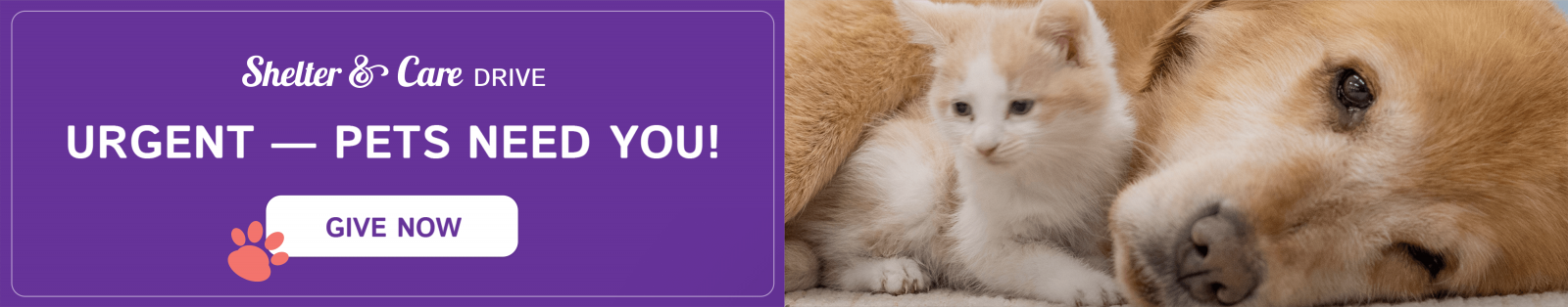 URGENT- PETS NEED YOU! - GIVE NOW