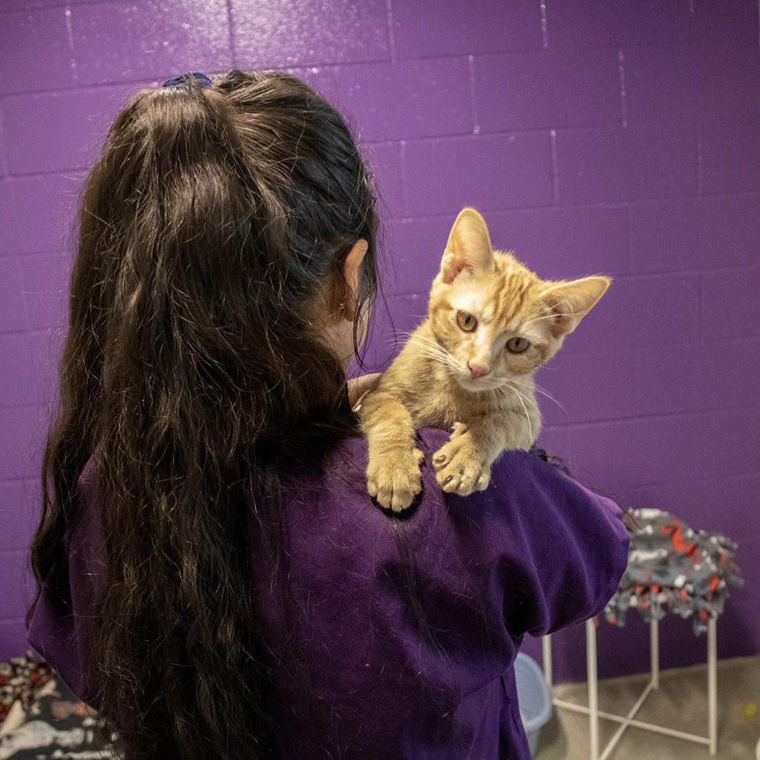 Adoption Cats3 small