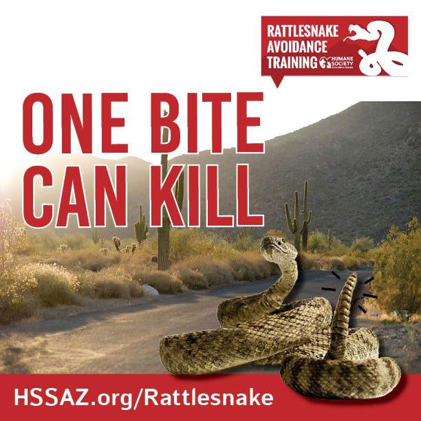Rattlesnake Avoidance- Email Square