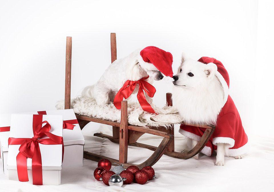 christmas-4012186_960_720