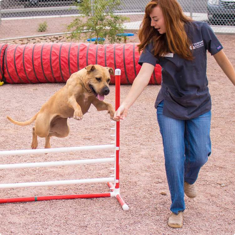 Dog jumping on agility course with New Beginnings staff