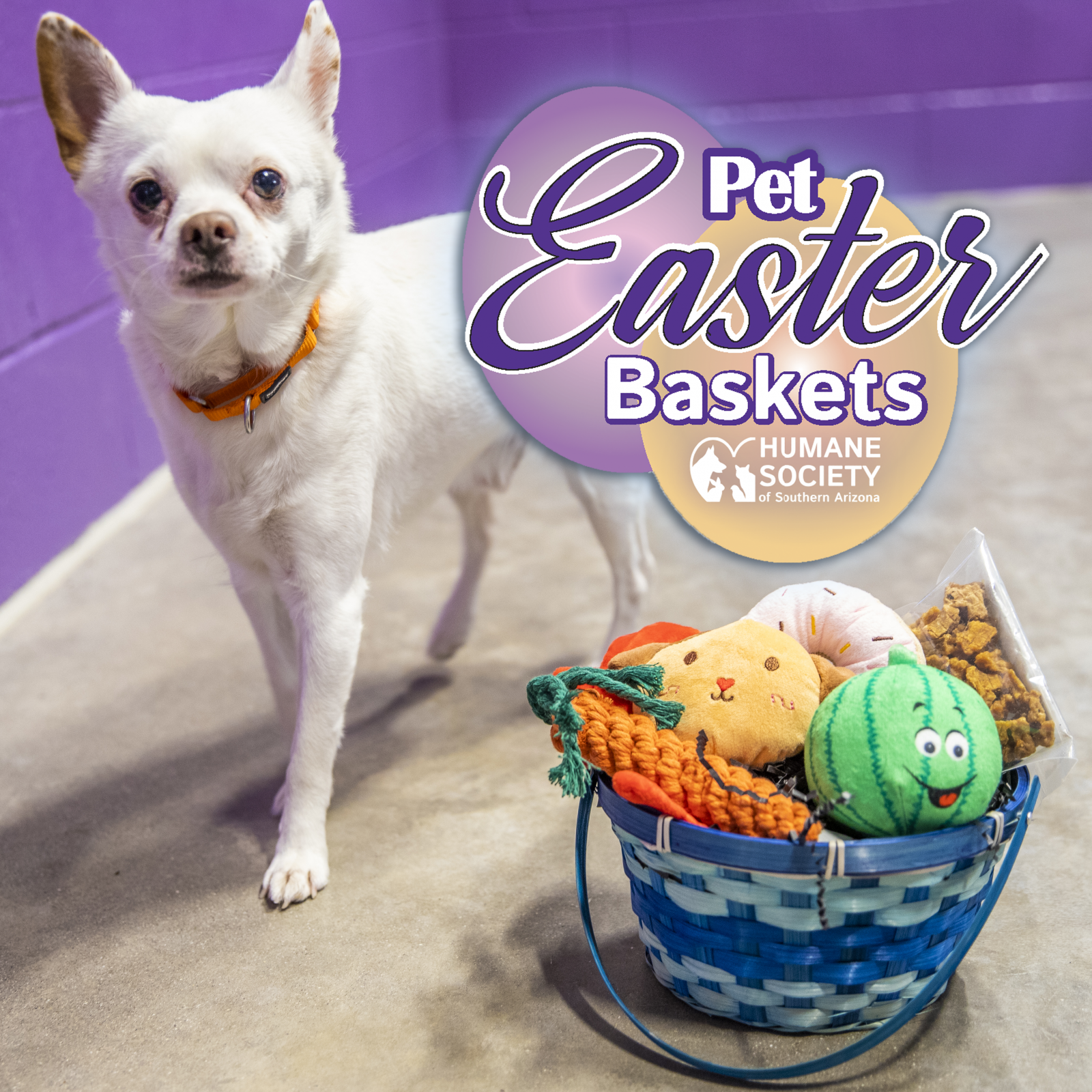 pet easter basket square graphic