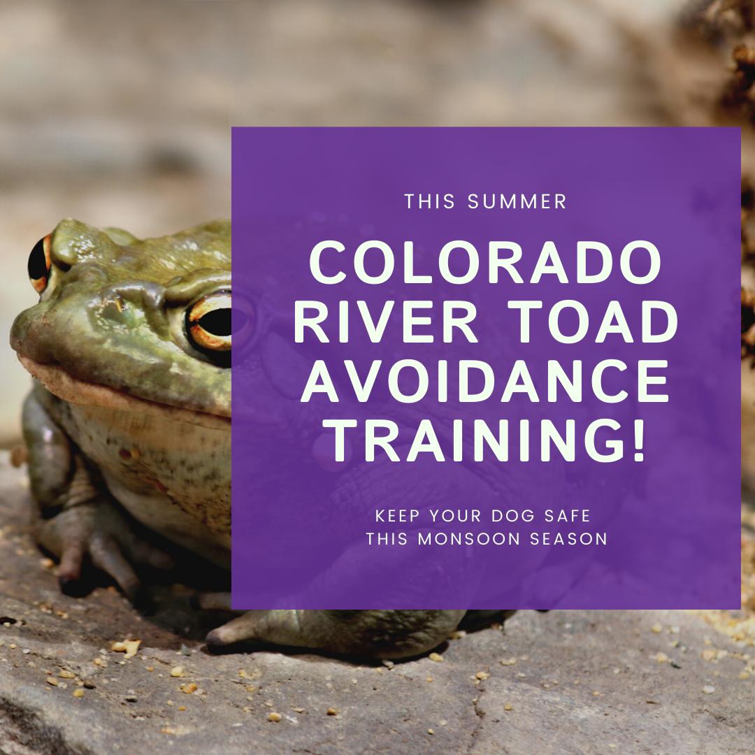 toad avoidance (1)