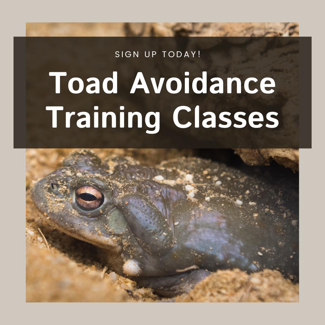 toad avoidance